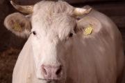 Bij Frans op den Bult kunt u genieten van (h)eerlijk vlees van ambachtelijke slagerij De Hoeve uit Eibergen